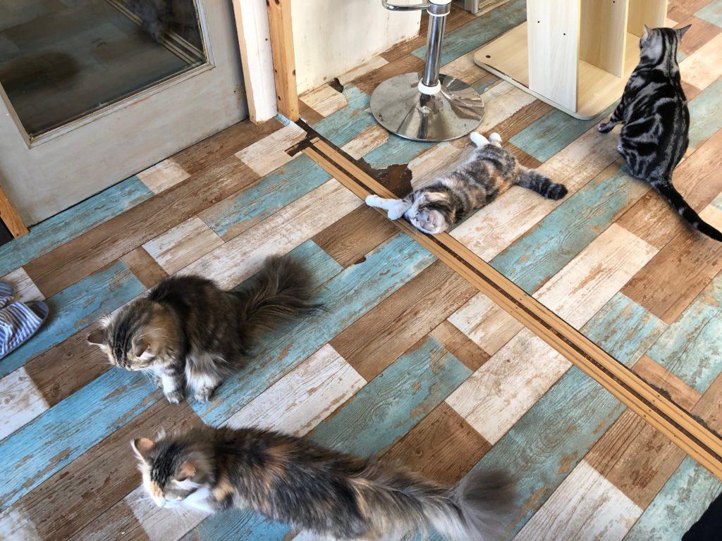 猫ちゃんがいっぱい