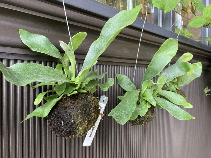 育てる植物
