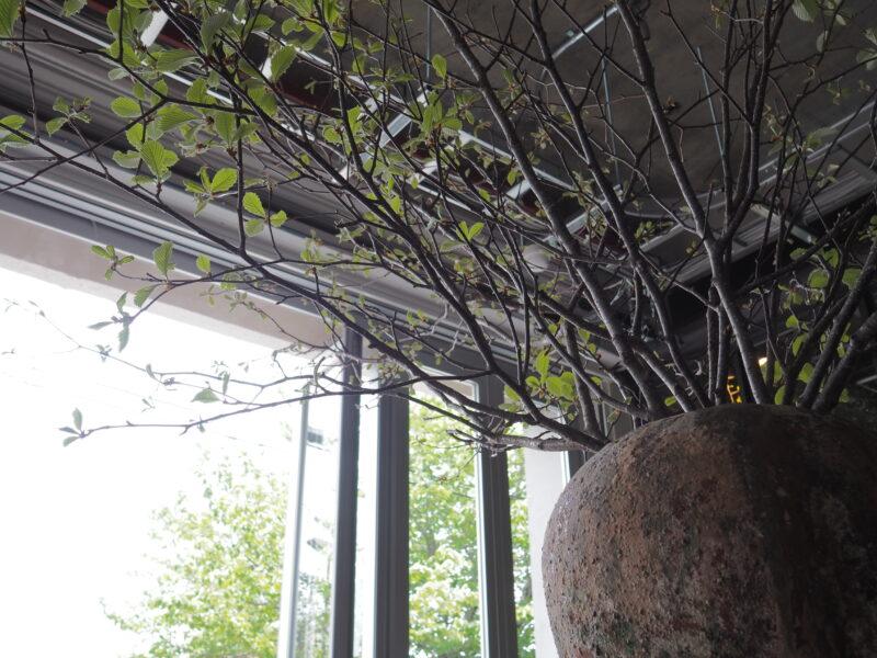 大テーブルの植物
